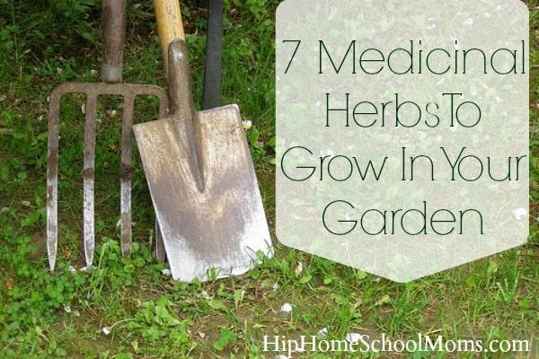 7 Medicinal Herbs to Grow in Your Garden