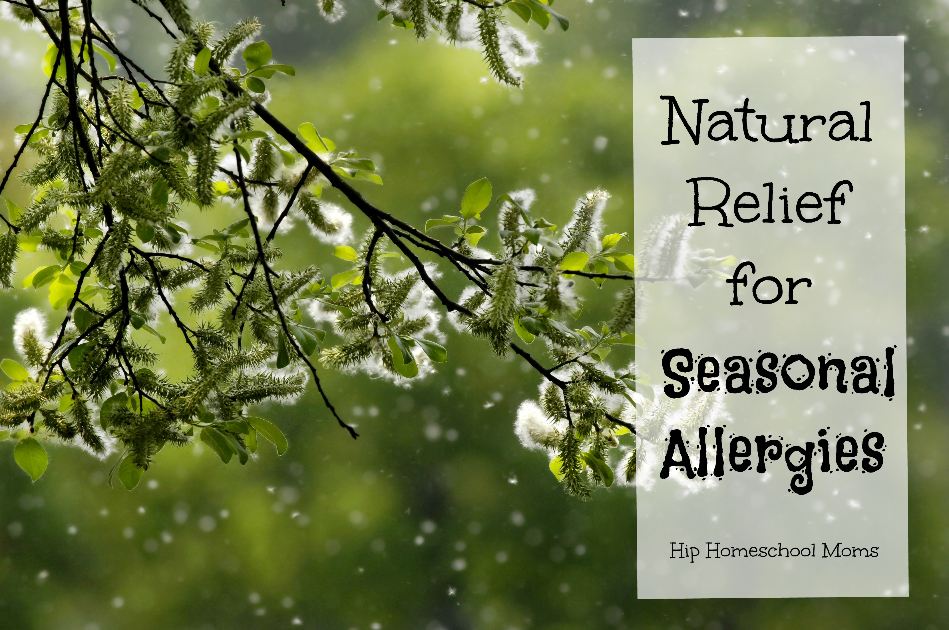 Natural Relief for Seasonal Allergies