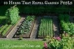 10 Herbs That Repel Garden Pests