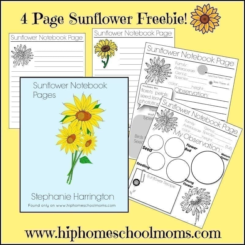Free Sunflower Notebook Pages | Hip Homeschool Moms