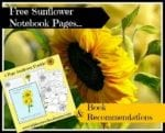 Sunflower Notebook Pages & Book Recommendations