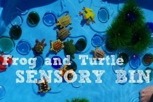 Frog and Turtle Sensory Bin