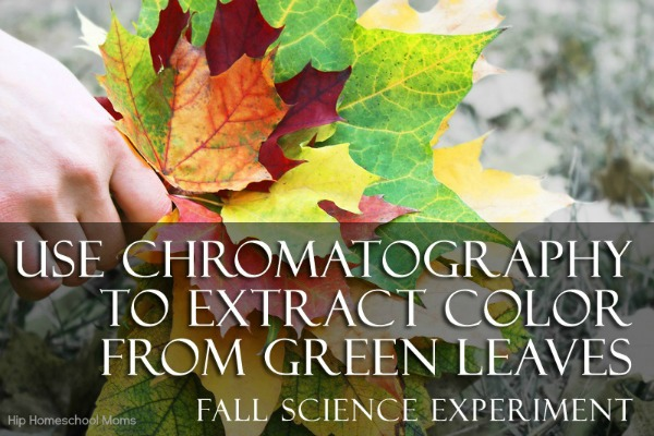 Use Chromotography to Extract Color from Green Leaves