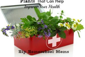 Plants That Can Help Improve Your Health
