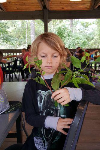 HOP Edible Plant Hike