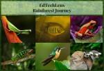 Rainforest Journey: How a Trip Inspired an E-learning Program for Children
