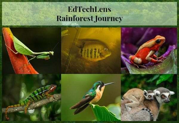 Rainforest Journey: How a Trip Inspired an E-learning Program for Children