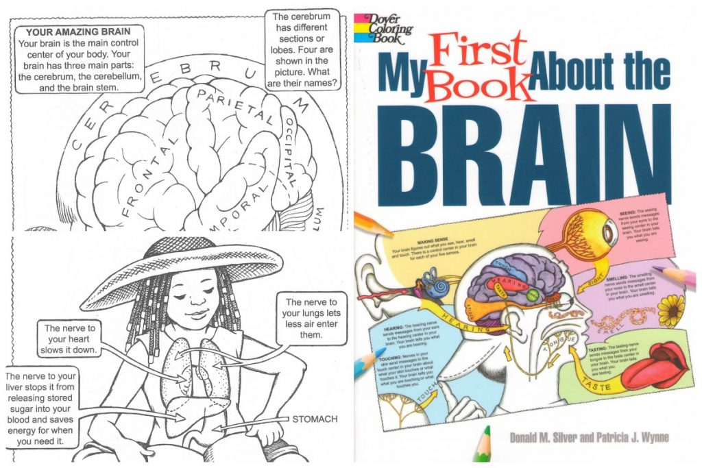 my first book about the brain - Dover Coloring Book