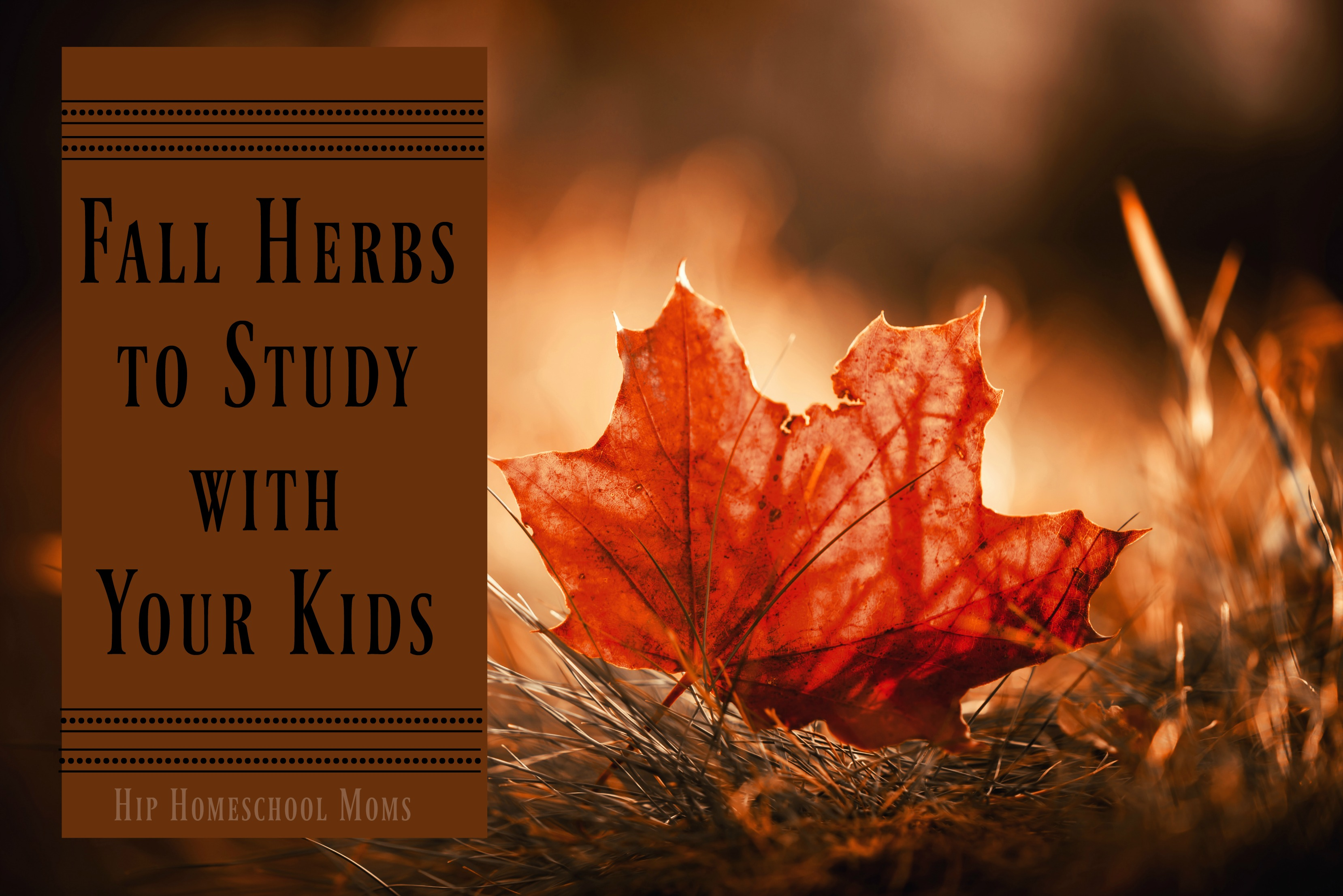 Fall Herbs to Study with Your Kids