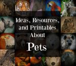Ideas, Resources, and Printables About Animals