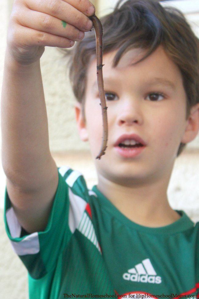 Nature Ideas for Kids |Hip Homeschool Moms