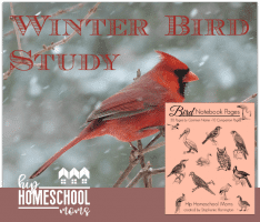 Winter Bird Study | Notebooking