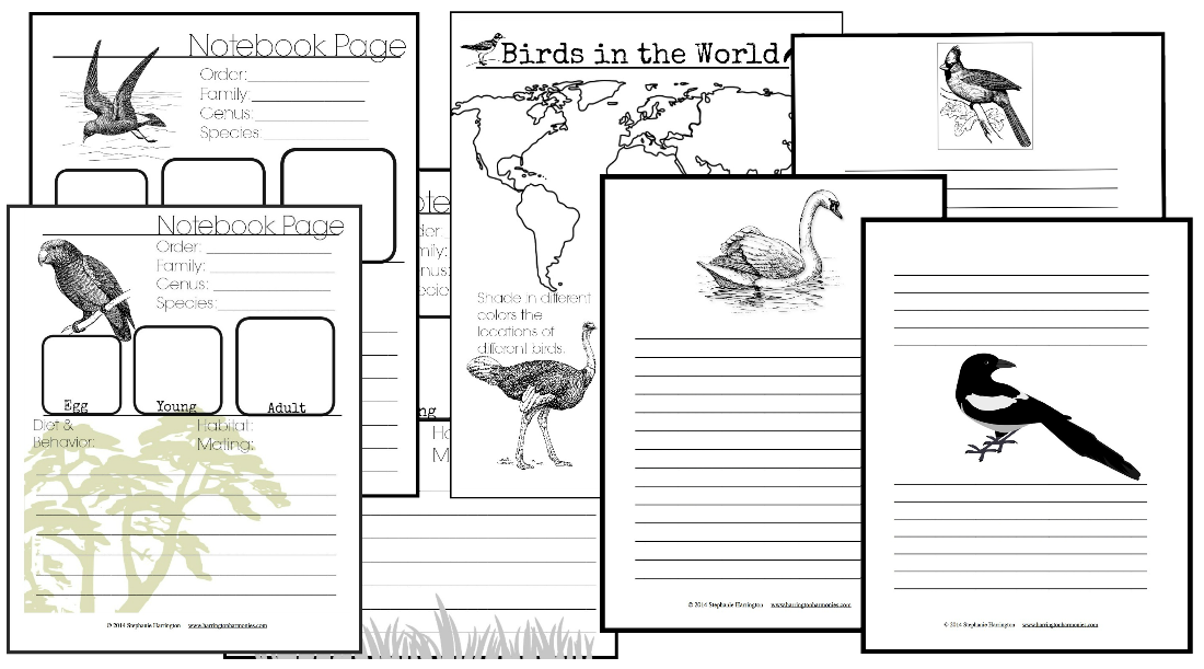 Bird Notebook Pages