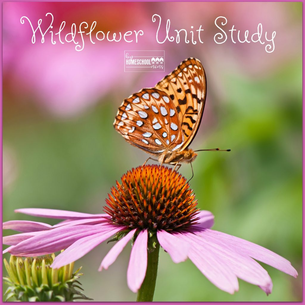 5 easy steps for a wildflower unit study!