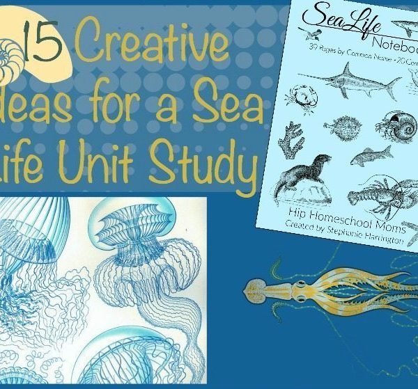 15 Creative Ideas for a Sea Life Unit Study