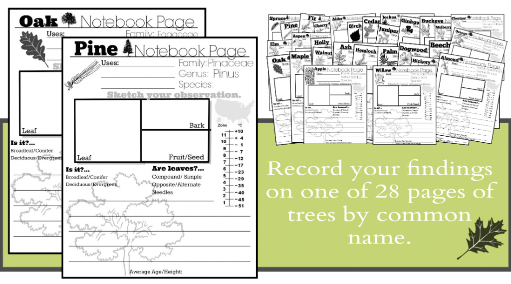 Record Tree Info on one of 28 pages by common name.