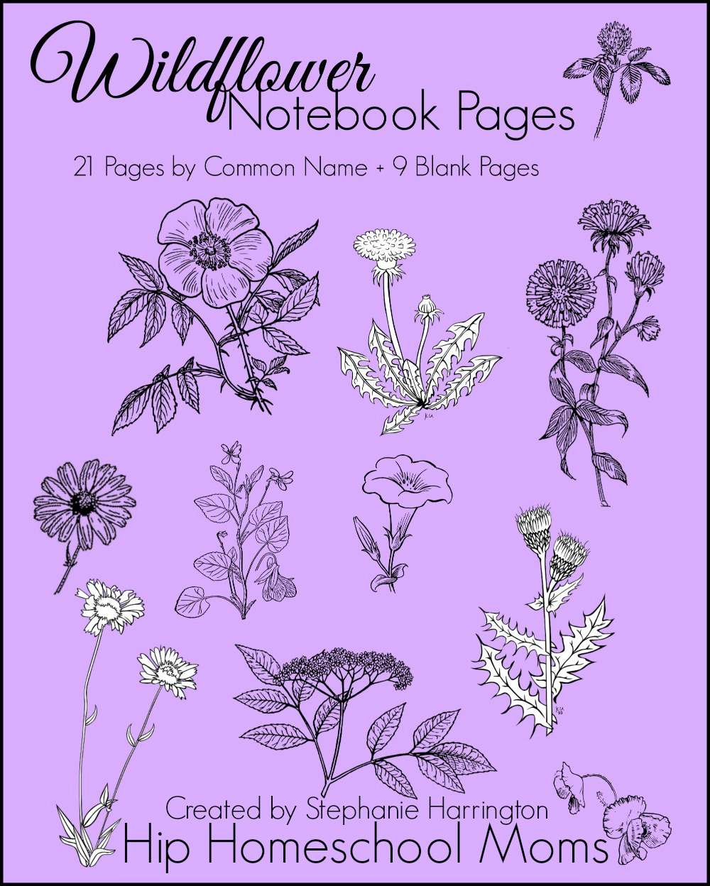 Wildflower Notebook Pages Cover