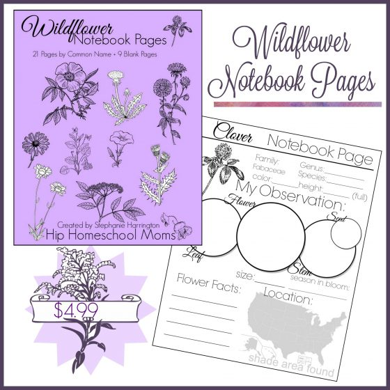 Wildflower Notebook Pages