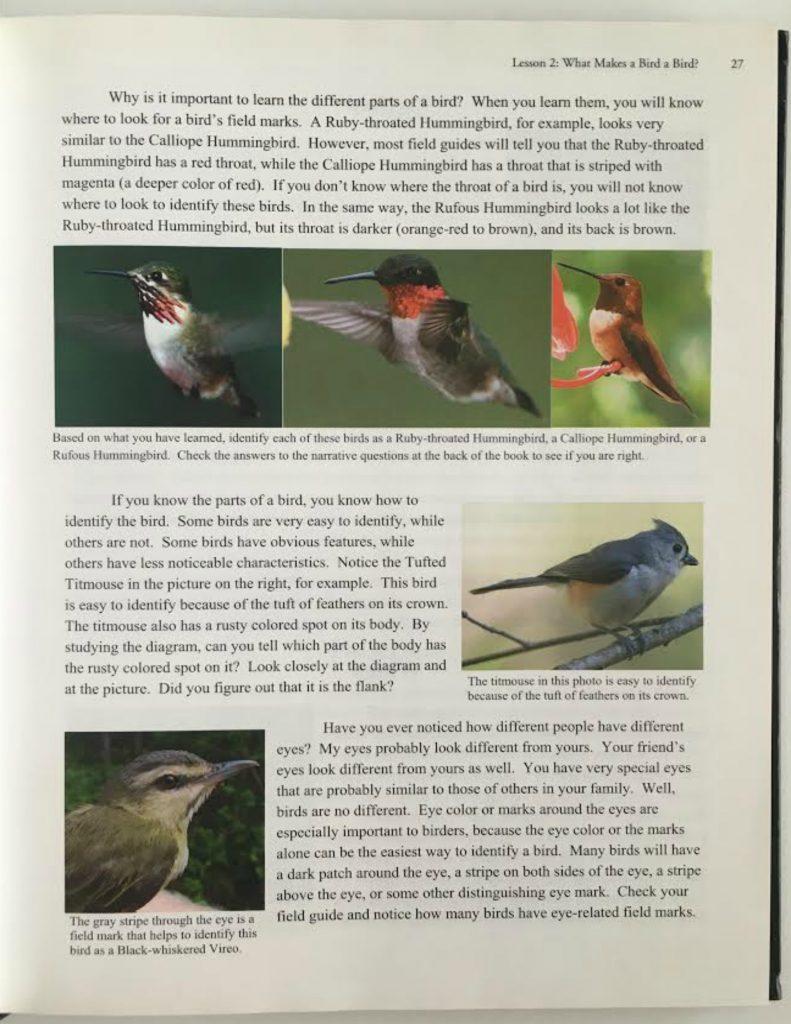 backyard bird study hip homeschool moms