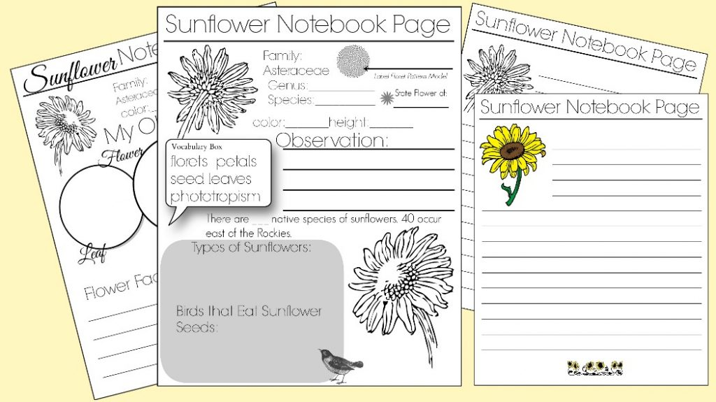 Sunflower Notebook Pages