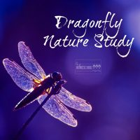 This is a fun and easy dragonfly nature study from Hip Homeschool Moms!