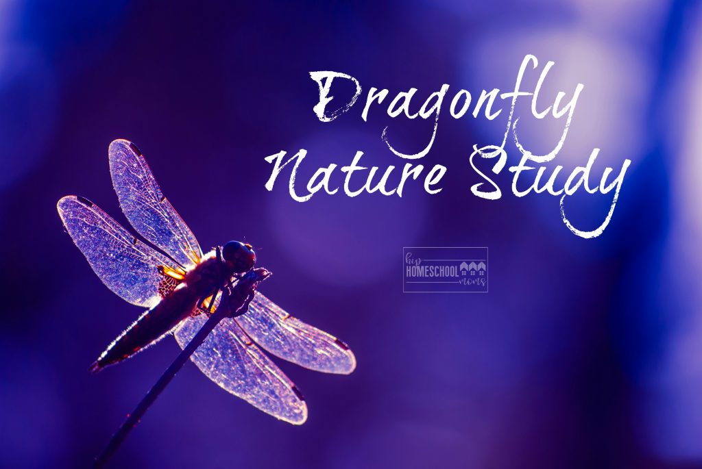 This is an easy and fun nature study on dragonflies from Hip Homeschool Moms!